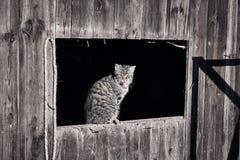 Katze, die in der Sonne sich aalt Lizenzfreies Stockbild