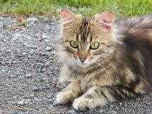 Katze, die draußen legt Stockfotografie