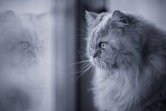 Katze, die durch das Fenster schaut Lizenzfreie Stockfotos