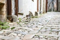 Katze, die durch die alte Stadt geht Stockbild