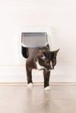 Katze, die durch die Katzentür überschreitet Stockbilder
