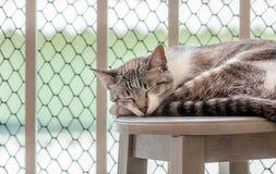 Katze, die durch ein Balkon ` s Fenster schläft Lizenzfreies Stockfoto