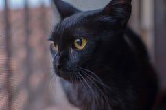 Katze, die durch ein Fenster schaut Lizenzfreie Stockfotos