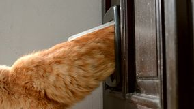 Katze, die durch Haustiertür in einer Tür herausnimmt stock video