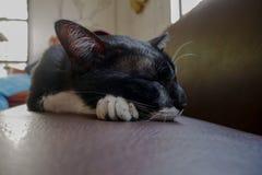 Katze, die durch Sofa schläft stockfoto