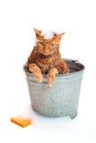 Katze, die ein Bad erhält stockbild