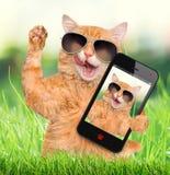 Katze, die ein selfie mit einem Smartphone nimmt Lizenzfreie Stockfotos