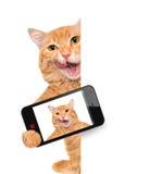 Katze, die ein selfie mit einem Smartphone nimmt Stockbild