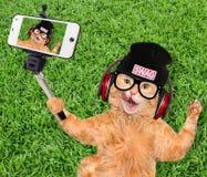 Katze, die ein selfie mit einem Smartphone nimmt Stockbilder