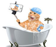 Katze, die ein selfie mit einem Smartphone nimmt Lizenzfreies Stockfoto