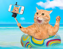 Katze, die ein selfie zusammen mit einem Smartphone nimmt Lizenzfreie Stockfotografie