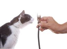 Katze, die ein Stethoskop überprüft Stockfotografie