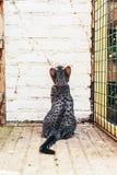 Katze, die eine Backsteinmauer betrachtend sitzt Stockbild