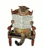 Katze, die eine Zeitung im Stuhl liest stockfoto
