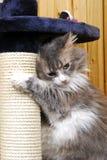 Katze, die in einem Cat-house spielt stockfotografie