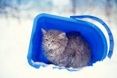 Katze, die in einem Eimer in Deckung geht Stockfotografie