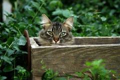Katze, die in einem Kasten hidding ist Stockbild