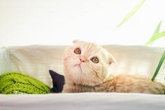 Katze, die in einem Kasten sich versteckt Stockfoto