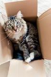 Katze, die in einem Kasten sitzt Stockfotografie