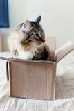 Katze, die in einem Kasten sitzt Stockbild