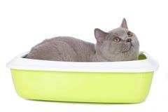 Katze, die in einem Katzenklo sitzt Lizenzfreie Stockbilder