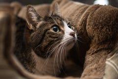 Katze, die in einem Korb sitzt Lizenzfreies Stockfoto