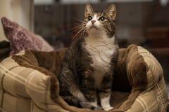 Katze, die in einem Korb sitzt Stockfotografie
