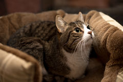Katze, die in einem Korb sitzt Stockbilder