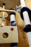 Katze, die in einem sehr großen Cat-house spielt Stockbild