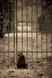 Katze, die an einem Tor sitzt Stockfoto