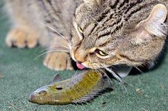 Katze, die einen Fisch isst Stockfoto