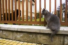 Katze, die einen Hund hinter einem Zaun betrachtet Stockbilder