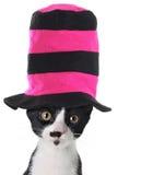 Katze, die einen Hut trägt Stockbild
