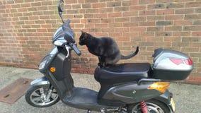 Katze, die einen Roller reitet lizenzfreie stockbilder