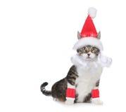 Katze, die einen Weihnachtsmann-Hut und einen Bart auf Weiß trägt Lizenzfreies Stockfoto