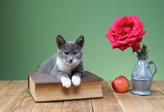 Katze, die für das Buch im Studio aufwirft Stockfotografie