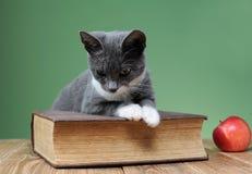 Katze, die für das Buch im Studio aufwirft Lizenzfreie Stockfotografie