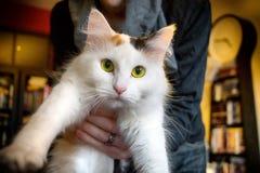 Katze, die gehalten wird lizenzfreies stockbild