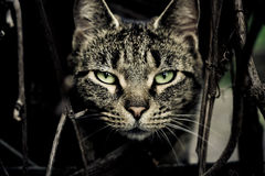 Katze, die gerade Ihnen betrachtet Stockbild