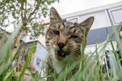 Katze, die Gras isst stockbild