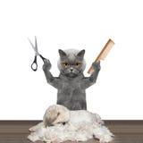 Katze, die groomung Hund mit Scheren und Kamm antut lizenzfreie stockfotografie
