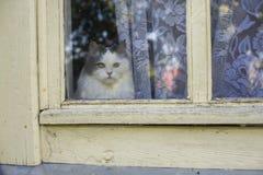 Katze, die heraus das Fenster schaut Lizenzfreie Stockfotos