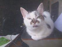 Katze, die heraus Fenster schaut Lizenzfreie Stockbilder