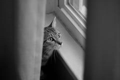 Katze, die heraus Fenster schaut Stockfotos