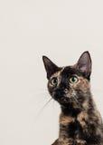 Katze, die heraus späht Stockfotografie