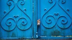 Katze, die heraus von der blauen Tür schaut Lizenzfreies Stockfoto