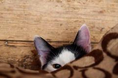 Katze, die heraus von unterhalb eines Betts späht Stockfotografie