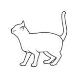 Katze, die hinten darstellt Stockbilder