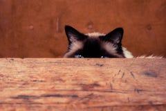 Katze, die hinter einer Tabelle sich versteckt Lizenzfreies Stockbild