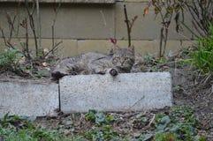 Katze, die im Garten liing ist lizenzfreie stockfotografie